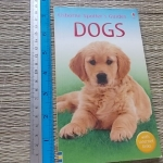 Usborne Spotter's Guide: DOGS