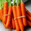 (Whole 1 Oz) แครอทสีส้ม แดนเวอร์