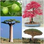 ไม้ยืนต้น - Tree Seeds