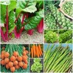 ผัก - Vegetable Seeds