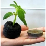 ดินและวัสดุปลูกพืช - Soil and Tool