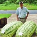 แตงโม - Watermelon Seeds