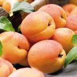 แอปริคอต แมนจูเรียน - Manchurian Apricot
