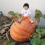 ฟักทอง - Pumpkin Seeds
