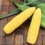ข้าวโพดหวานเอ็กซ์ตร้า - Early Xtra Sweet Corn F1 thumbnail 1