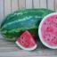 แตงโม ออลสวีส - All Sweet Watermelon thumbnail 1