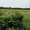 ที่ดินเปล่า 2 ไร่ 2 งาน ใกล้วัดไผ่โรงวัว บางหลวง บางเลน นครปฐม