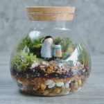 Moss Terrarium Care