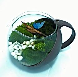 ชุดจัดสวนขวด Tea Time