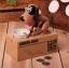 หมาออมสินกินเหรียญ (กระปุกออมสินหมากินเหรียญ) thumbnail 8