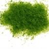 Sponge powder สีเขียวอ่อน 30 กรัม