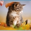 จิ๊กซอว์ ลายทั่วไป วิว หมาแมว เรือ ทะเล ภูเขา Jigsaw Puzzle 500 ชิ้น thumbnail 1