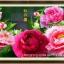ดอกไม้สีแดง+ชมพู ชุดปักครอสติช พิมพ์ลาย งานฝีมือ thumbnail 1