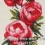 ดอกไม้แดง ชุดปักครอสติช พิมพ์ลาย งานฝีมือ thumbnail 1