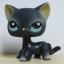 แมว Siamese cat #994 (หายากมาก) thumbnail 1