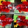 (กาแลคซี่)ปลากัดคัดเกรดครีบสั้น - Halfmoon Plakad Fancy Red Galaxy Premium Quality Grade