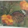 จิกซอว์รูปดอกไม้กับผีเสื้อ