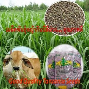 Tanzania/TD58 Grass seeds ( 1 kilogram/pack )