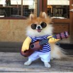 ชุดแฟนซี น้องหมา น้องแมว ชุดนักดนตรีเล่นกีต้าร์ Size L