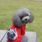ชุดน้องหมา เสื้อhoodหมาหน้าบึ้งสีแดง