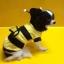 ชุดแฟนซี น้องหมา น้องแมว ผึ้งน้อยมีปีก thumbnail 2