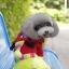 ชุดน้องหมาสี่ขาhoodหมีสีแดง thumbnail 1