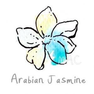 ASMINE(ARABIAN) หัวน้ำหอม มะลิอาราเบียน