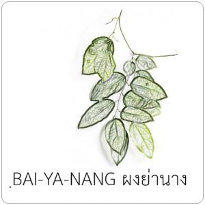 ฺBAI-YA-NANG ผงย่านาง