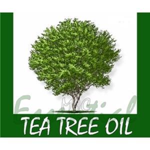 TEA TREE OIL น้ำมันหอมระเหย