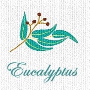 EUCALYPTUS OIL น้ำมันหอมระเหย