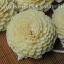 ดอกมะลิซ้อนขนาดโต 7 ซม.