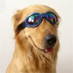 แว่นตาสุนัข สำหรับสุนัขใหญ่